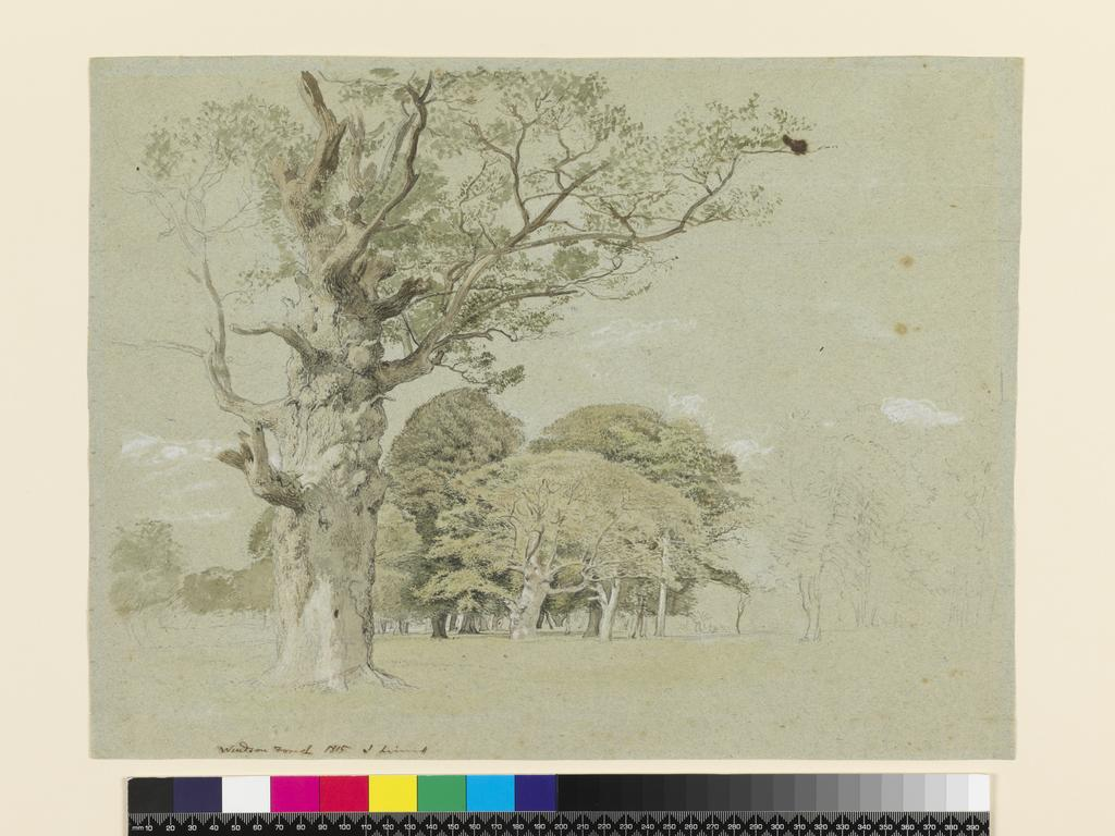 An image of Windsor Forest. Linnell, John (British, 1792-1882). Graphite and watercolour with touches of white on blue paper, height 325 mm, width 429 mm, 1815.